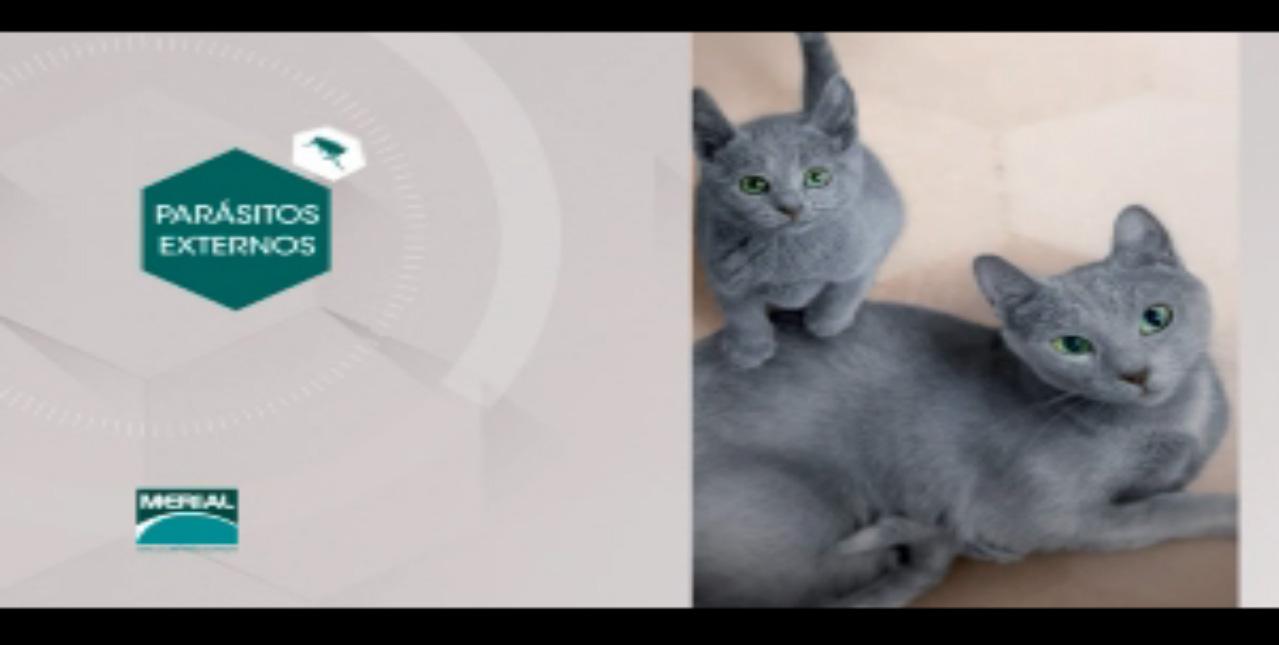 Mascotas parásitos externos